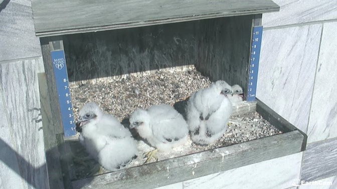 Three chick out on ledge